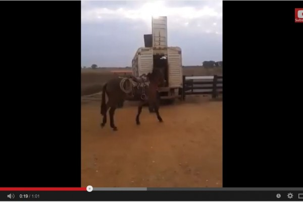 How Brazilians train horses to step in the truck! Check this video!