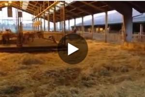 Excellent farm! Jersey signals