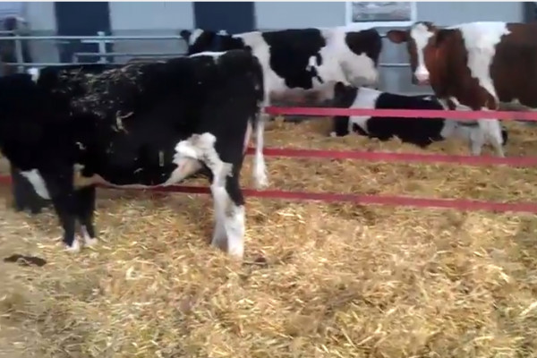 Example of a stress-free calving line in the Netherlands