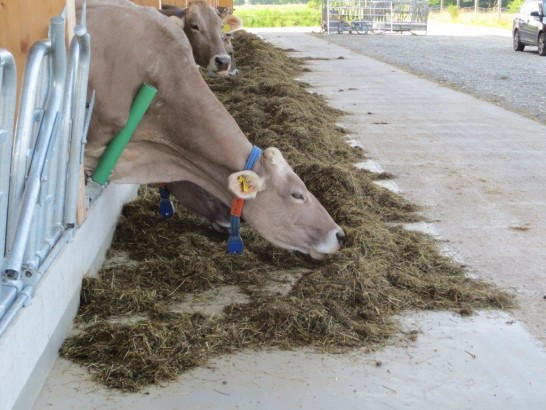 Make eating easy and save: the flexible feed fence