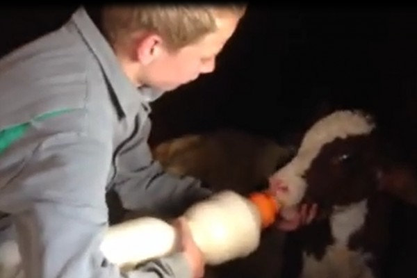 Tip: handy bottle to feed the calf