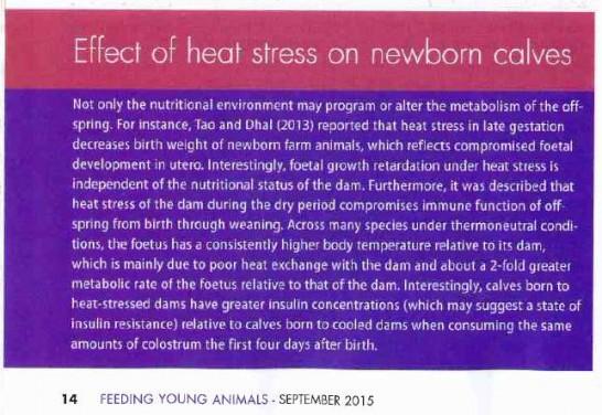 The effect of heat stress on newborn calves