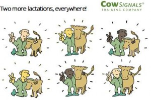 We go for two more lactations, everywhere!