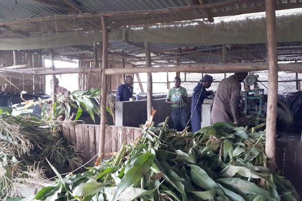 Great development: Silage Train in Kenya