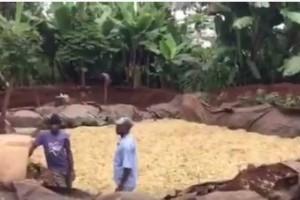 Making a silage pit in Kenya