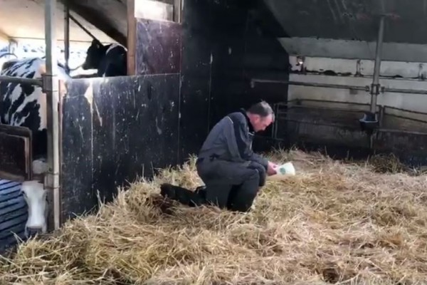 Feed colostrum right away! An half hour makes the difference