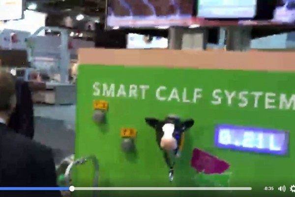 Smart solution: light in calf collar