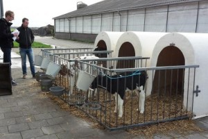 Blueprint makes good calf rearing possible for every farmer