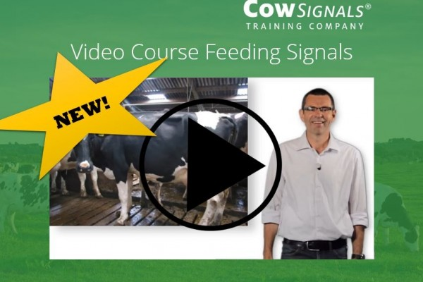 New! Video course Feeding Signals