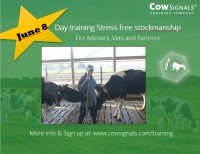 day training stress-free stockmanship.JPG