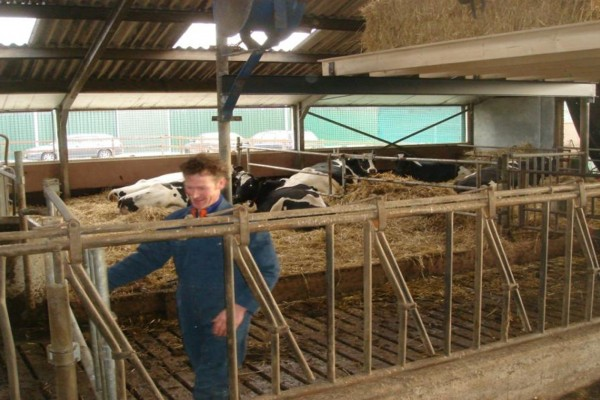 Good dry cow management is the key to two more lactations