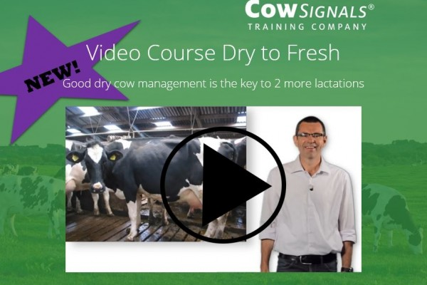 New! Video learning Dry to Fresh