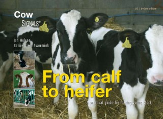 From calf to heifer - English edition
