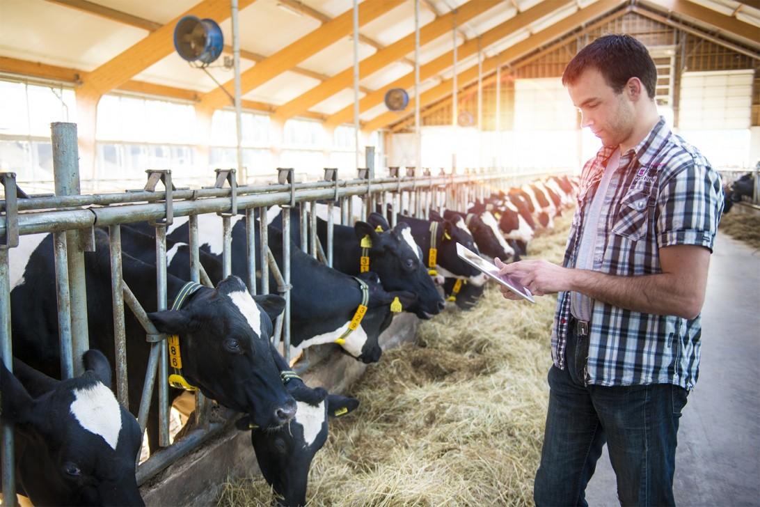 Sensors as a 'litmus test' that measures cow health