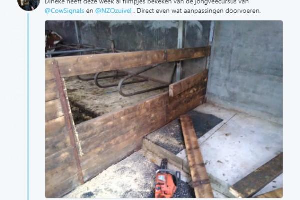 Nederlandse melkveehouders aan de slag met de jongveeopfok