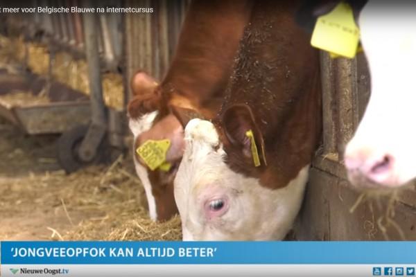 Boer vangt meer voor Belgische Blauwe na internetcursus