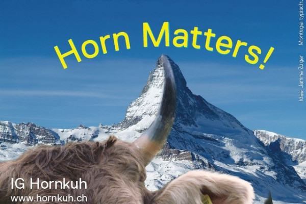Swiss voting on cow horns