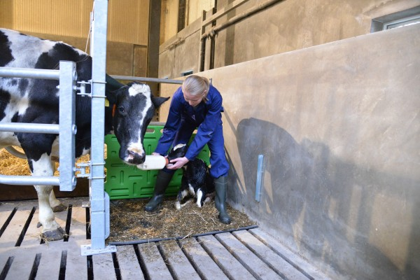 Colostrum feeding: the sooner the better