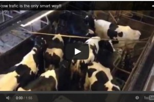 Free cow traffic is the only smart way!