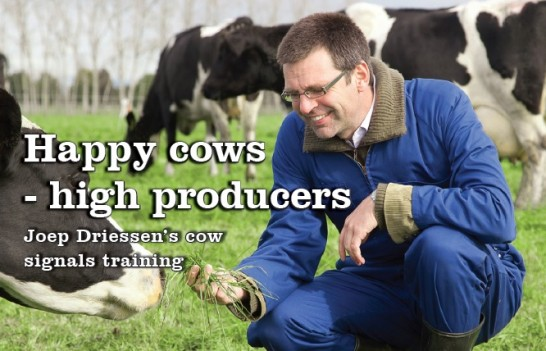 Happy cows, high producers