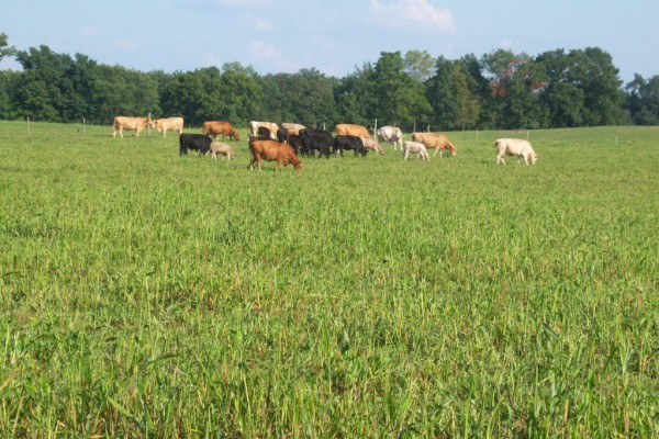 Grazing an ideal; good care and housing a duty