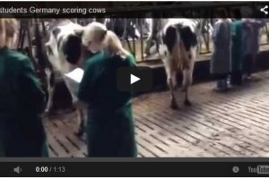 German vet students scoring cows
