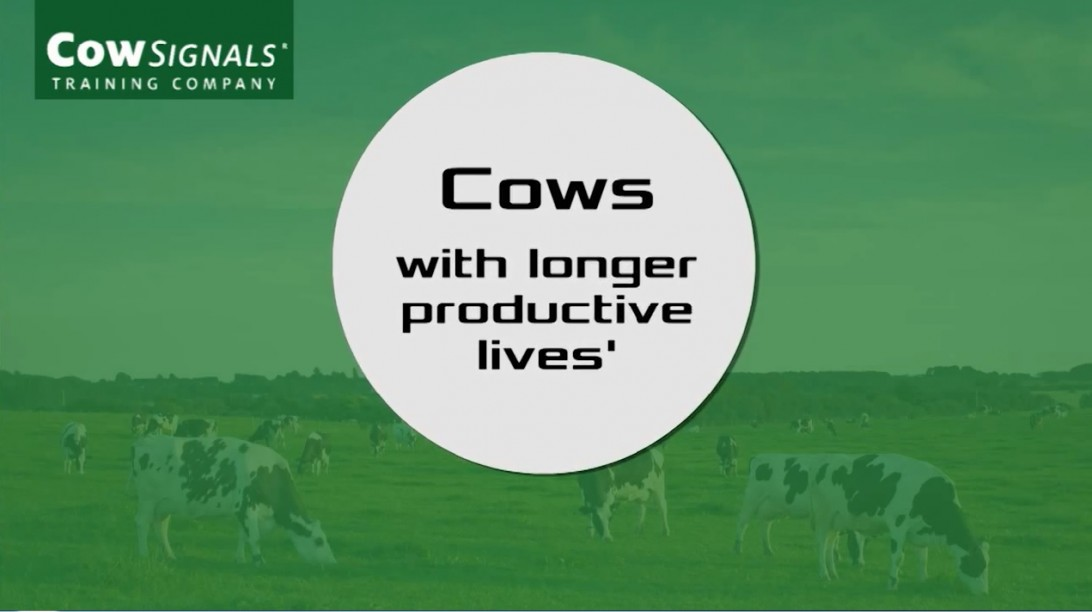 Cows with longer, productive lives. How can you do it?